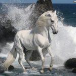 Caballo Albino en el agua del mar