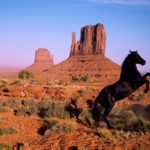 Caballo mustang de color negro en el desierto