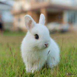 Conejos enanos o toy