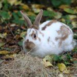 Conejo mariposa marrón en libertad