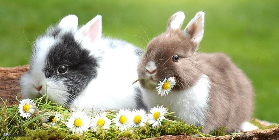 Conejos enanos comiendo flores