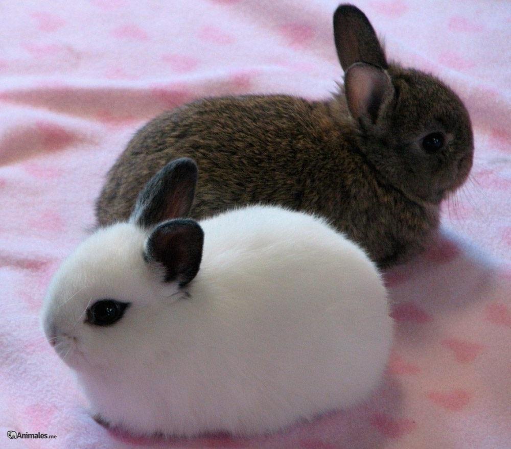 Pareja de conejos Toy
