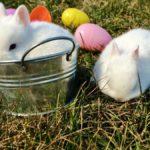Crias conejos super toy bebes jugando