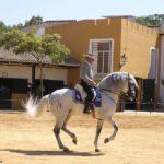 Montando caballo cartujano bailando