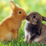 Pareja de conejos besandose