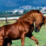 caballos alazan marron a dos patas