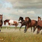 caballos mustang de varios colores