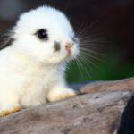 conejo bebe adorable