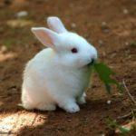 conejo blanco comiendo una hoja