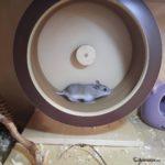 Hamster chino corriendo en su rueda