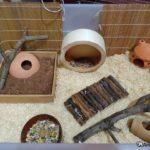 Hamster chino en su jaula perfectamente habilitada