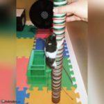 Hamster panda escalando