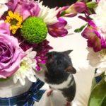 Hamster panda oliendo flores