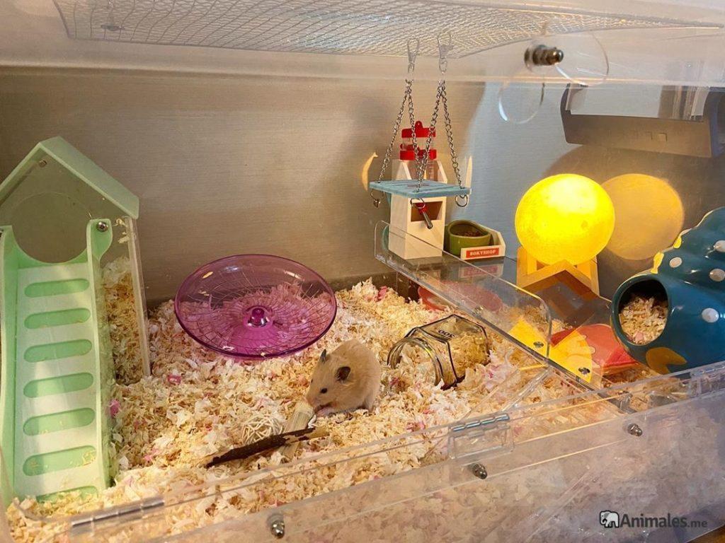 Jaula de hamster sirio
